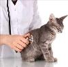 Ветеринарные клиники в Мегионе